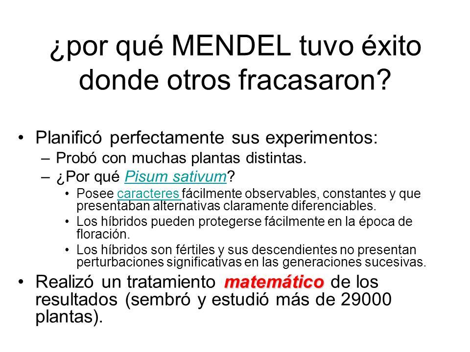 ¿por qué MENDEL tuvo éxito donde otros fracasaron? Planificó perfectamente sus experimentos: –Probó con muchas plantas distintas. –¿Por qué Pisum sati