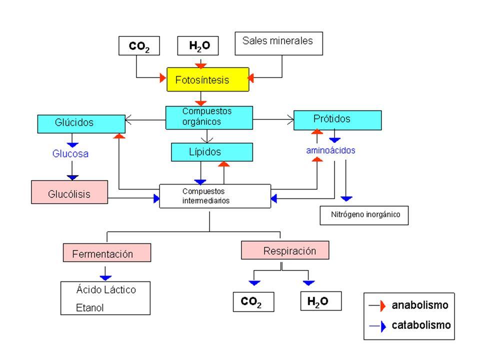 Sin vida o con vida microscópica ¿cómo sería un mundo sin fotosíntesis.