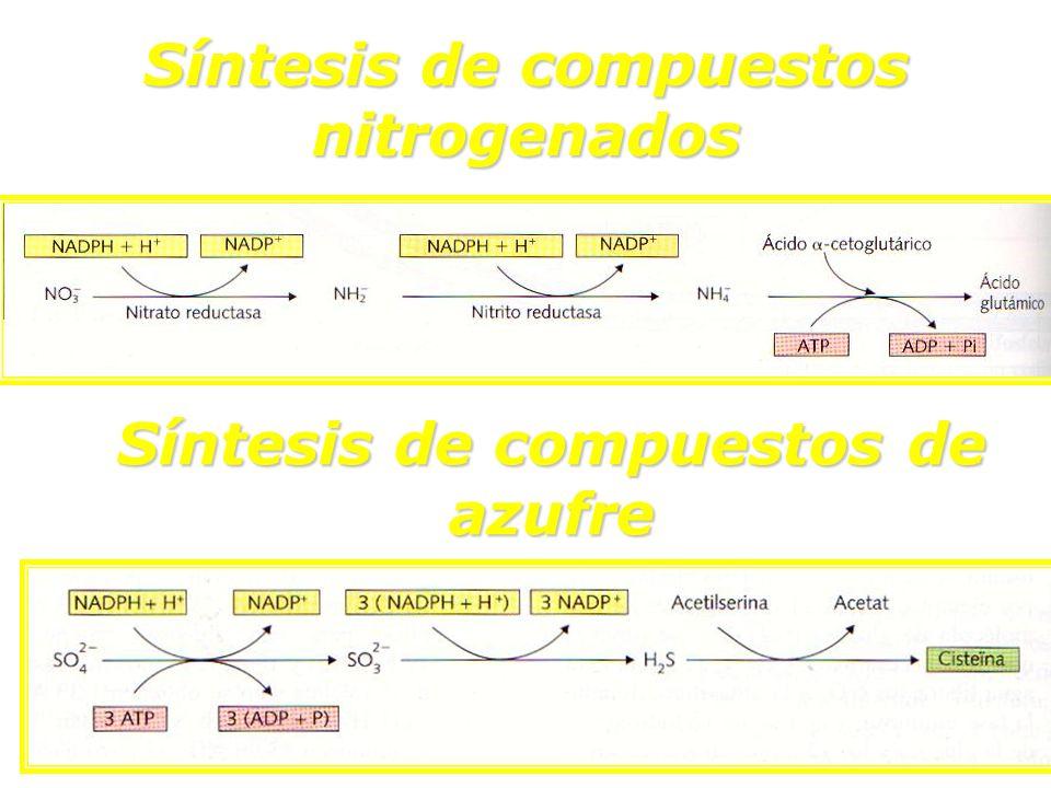 Síntesis de compuestos nitrogenados Síntesis de compuestos de azufre