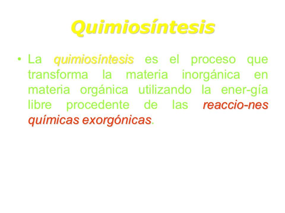 Quimiosíntesis quimiosíntesis reaccio-nes químicas exorgónicasLa quimiosíntesis es el proceso que transforma la materia inorgánica en materia orgánica