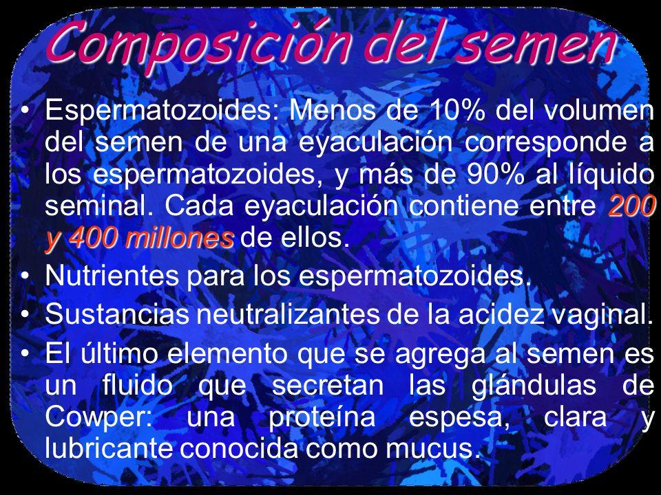 Composicióndel semen Composición del semen 200 y 400 millonesEspermatozoides: Menos de 10% del volumen del semen de una eyaculación corresponde a los