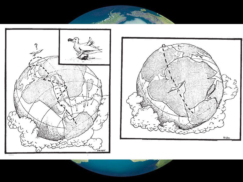 La litosfera se encuentra dividida en un conjunto de fragmentos rígidos denominados placas.La litosfera se encuentra dividida en un conjunto de fragmentos rígidos denominados placas.