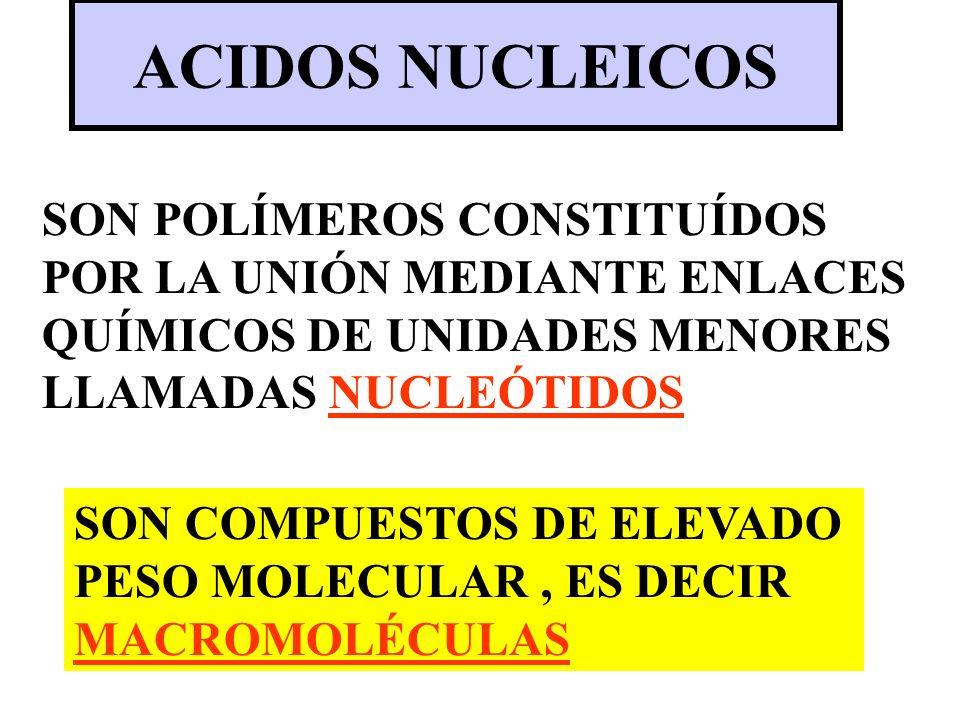 ACIDOS NUCLEICOS SON POLÍMEROS CONSTITUÍDOS POR LA UNIÓN MEDIANTE ENLACES QUÍMICOS DE UNIDADES MENORES LLAMADAS NUCLEÓTIDOS SON COMPUESTOS DE ELEVADO