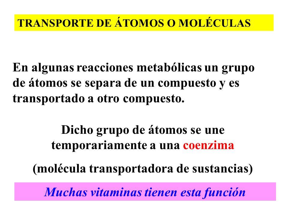TRANSPORTE DE ÁTOMOS O MOLÉCULAS En algunas reacciones metabólicas un grupo de átomos se separa de un compuesto y es transportado a otro compuesto. Di