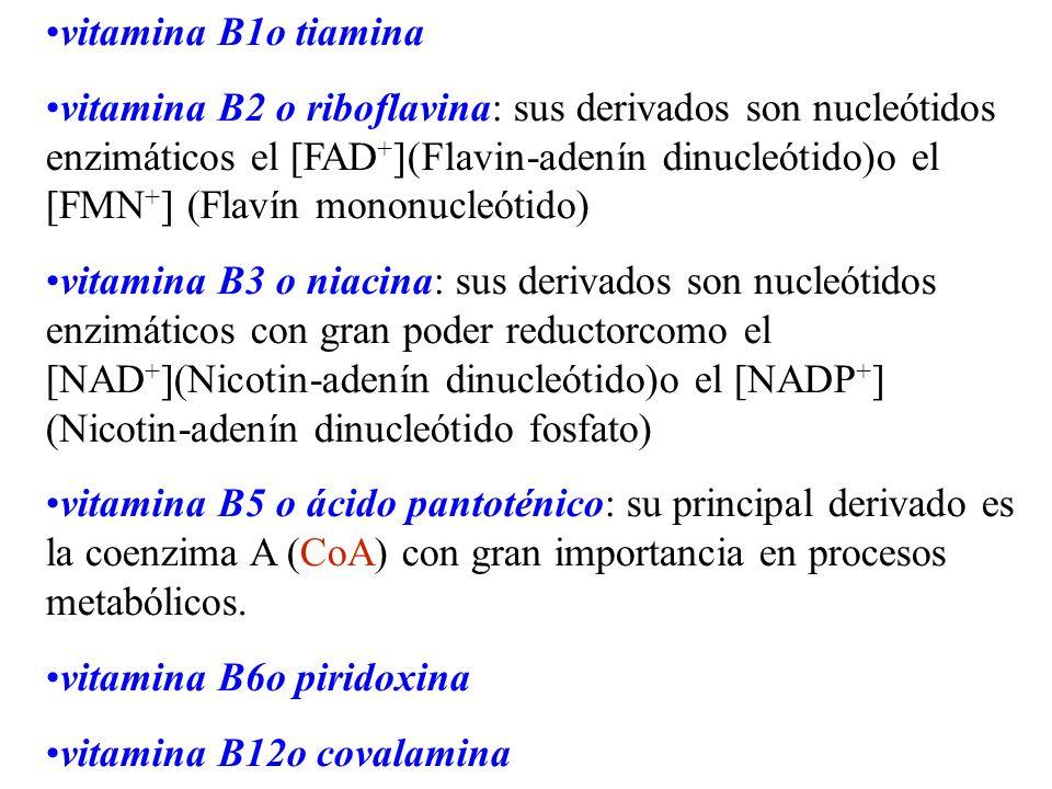 vitamina B1o tiamina vitamina B2 o riboflavina: sus derivados son nucleótidos enzimáticos el [FAD + ](Flavin-adenín dinucleótido)o el [FMN + ] (Flavín