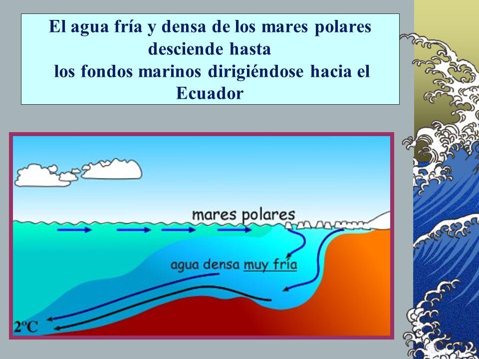CORRIENTES PROFUNDAS Afectan a la capa profunda del agua por debajo de la termoclina Se forman por las diferencias en la densidad del agua; como estas