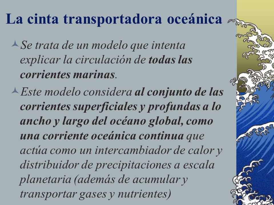 El océano global Conjunto formado por todos los mares y océanos del planeta. Dos fenómenos importantes: La cinta transportadora oceánica El fenómeno d