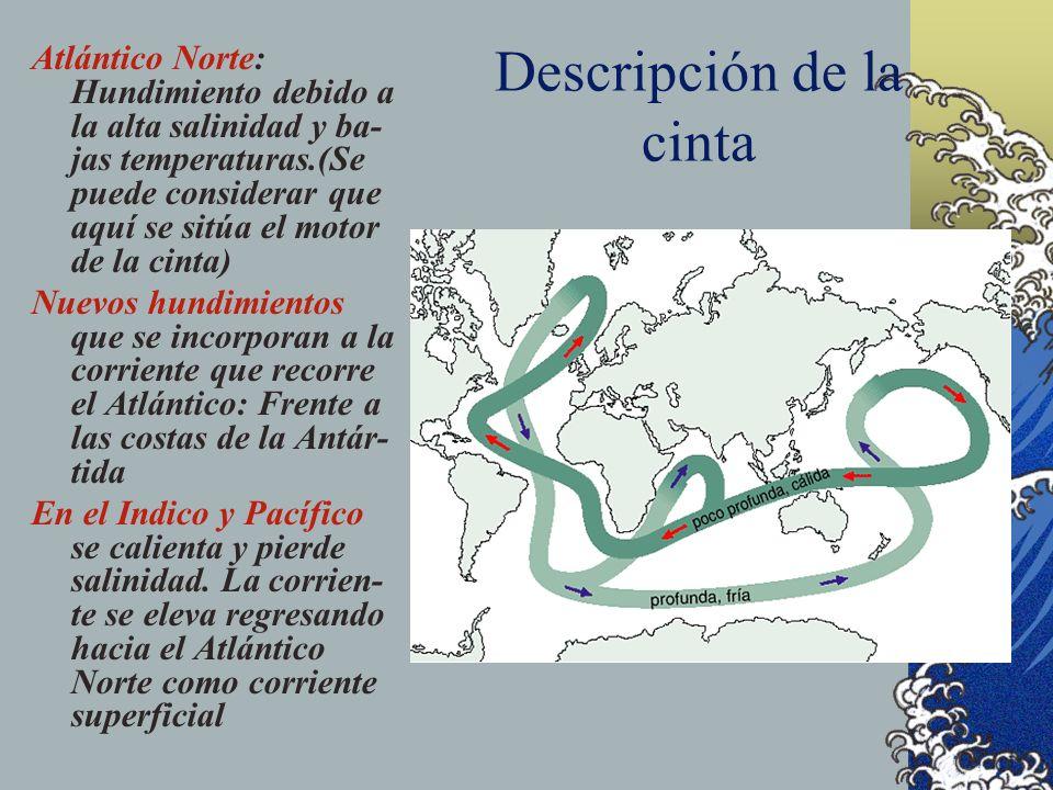 La cinta transportadora oceánica Se trata de un modelo que intenta explicar la circulación de todas las corrientes marinas. Este modelo considera al c