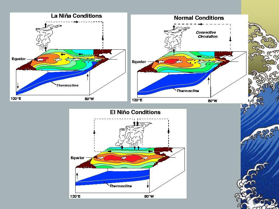 ¿Y la Niña? Es una exageración de la situación normal: Temperaturas del agua frente a Ecuador y Perú más bajas de lo habitual. Nivel del mar anormalme