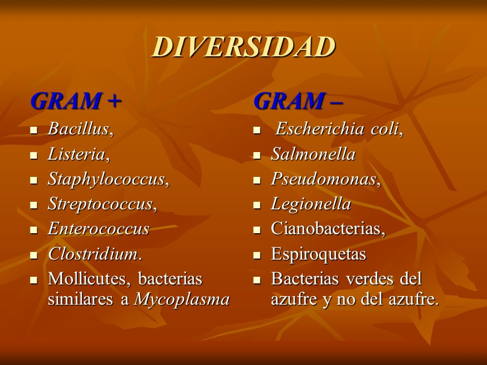 DIVERSIDAD GRAM + Bacillus, Bacillus, Listeria, Listeria, Staphylococcus, Staphylococcus, Streptococcus, Streptococcus, Enterococcus Enterococcus Clos
