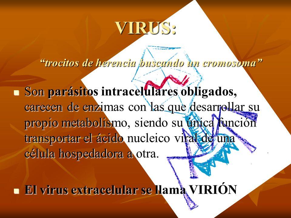 VIRUS: Son parásitos intracelulares obligados, carecen de enzimas con las que desarrollar su propio metabolismo, siendo su única función transportar e