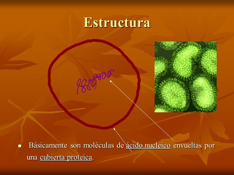 Básicamente son moléculas de ácido nucleico envueltas por una cubierta proteica. Básicamente son moléculas de ácido nucleico envueltas por una cubiert
