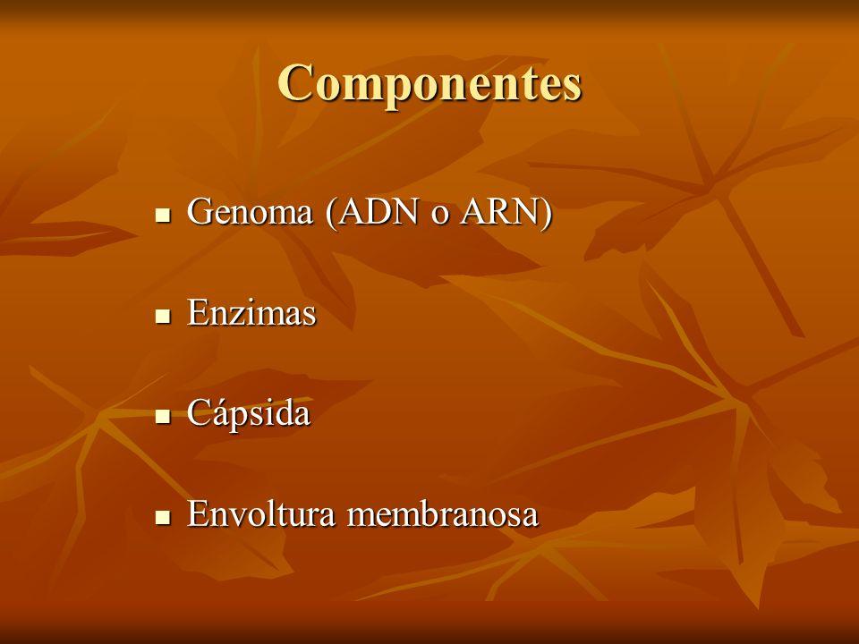 Componentes Genoma (ADN o ARN) Genoma (ADN o ARN) Enzimas Enzimas Cápsida Cápsida Envoltura membranosa Envoltura membranosa
