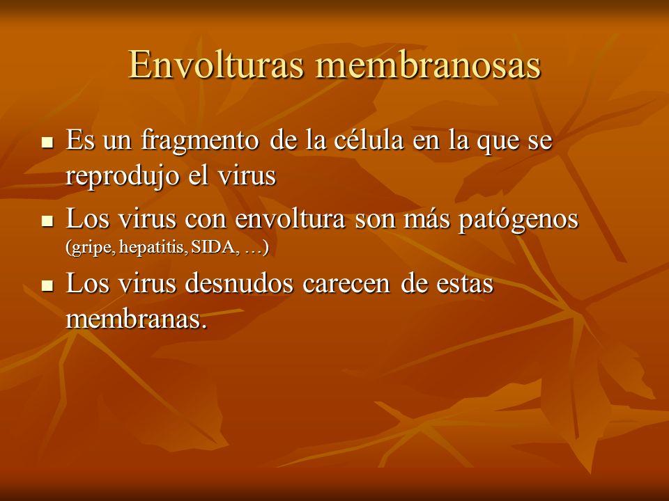Envolturas membranosas Es un fragmento de la célula en la que se reprodujo el virus Es un fragmento de la célula en la que se reprodujo el virus Los v