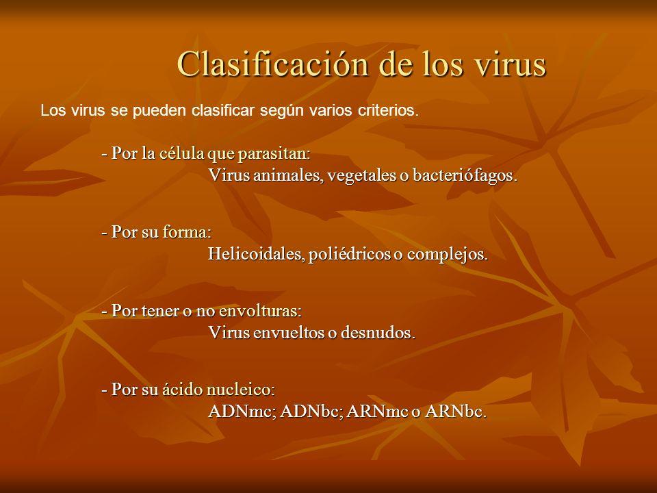 Clasificación de los virus - Por la célula que parasitan: - Por la célula que parasitan: Virus animales, vegetales o bacteriófagos. - Por su forma: He