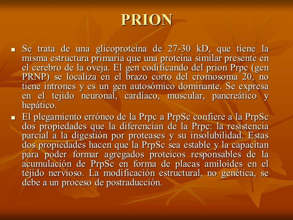PRION Se trata de una glicoproteína de 27-30 kD, que tiene la misma estructura primaria que una proteína similar presente en el cerebro de la oveja. E