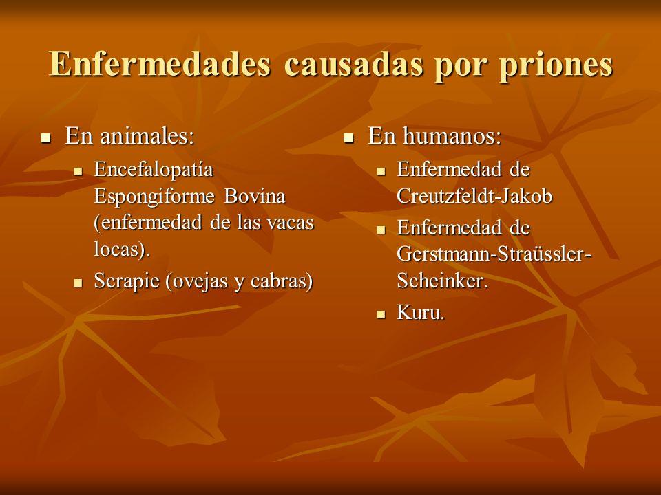 Enfermedades causadas por priones En animales: En animales: Encefalopatía Espongiforme Bovina (enfermedad de las vacas locas). Encefalopatía Espongifo