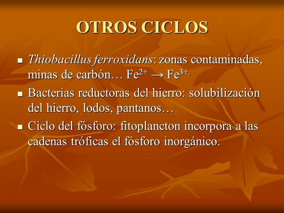OTROS CICLOS Thiobacillus ferroxidans: zonas contaminadas, minas de carbón… Fe 2+ Fe 3+. Thiobacillus ferroxidans: zonas contaminadas, minas de carbón