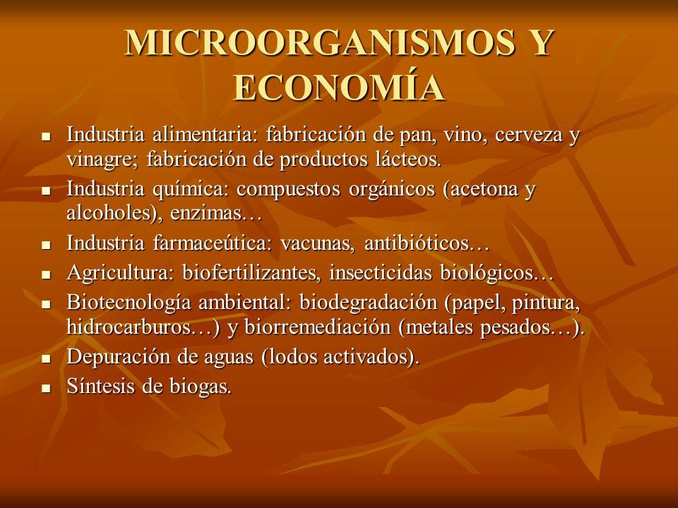 MICROORGANISMOS Y ECONOMÍA Industria alimentaria: fabricación de pan, vino, cerveza y vinagre; fabricación de productos lácteos. Industria alimentaria