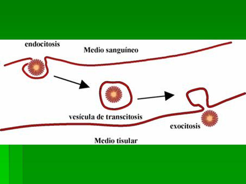 TRANSPORTE DE INFORMACIÓN Una célula que recibe estímulos externos y los transforma en: Una célula que recibe estímulos externos y los transforma en: Señales químicas (moléculas de señalización), que viajan hasta Señales químicas (moléculas de señalización), que viajan hasta Una célula que recibe las moléculas de señalización y responde a ellas de determinada manera.