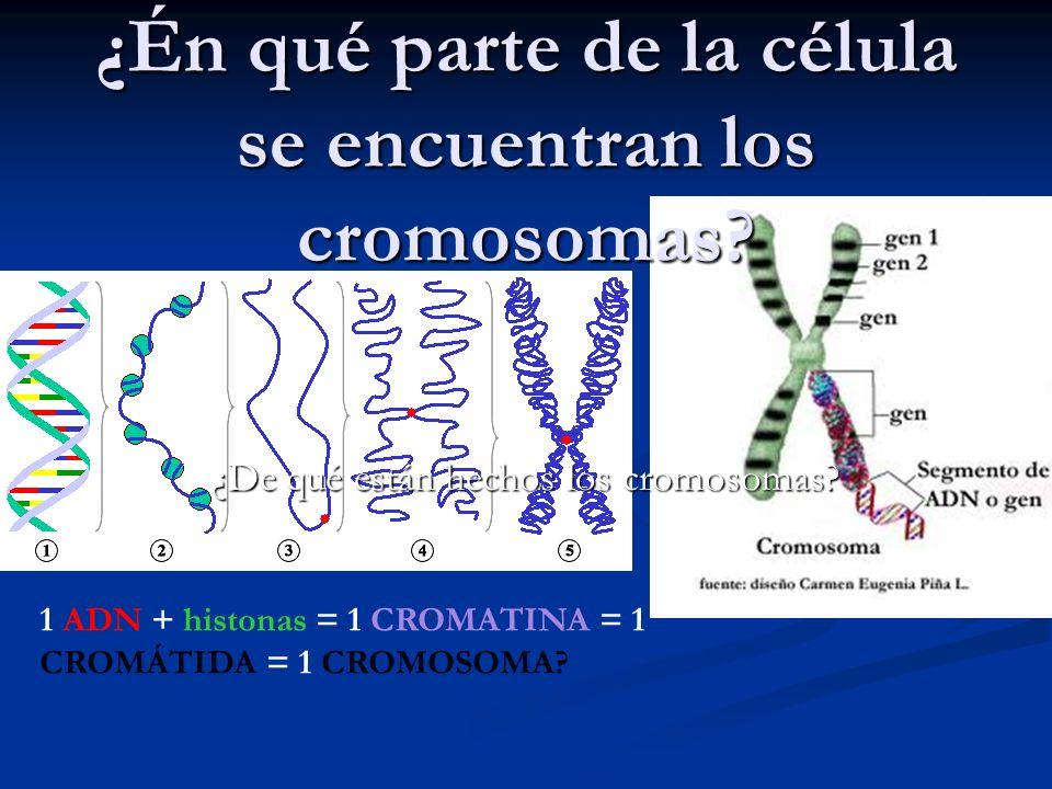 Curiosidades ¿A más ADN más complejo es el ser vivo?