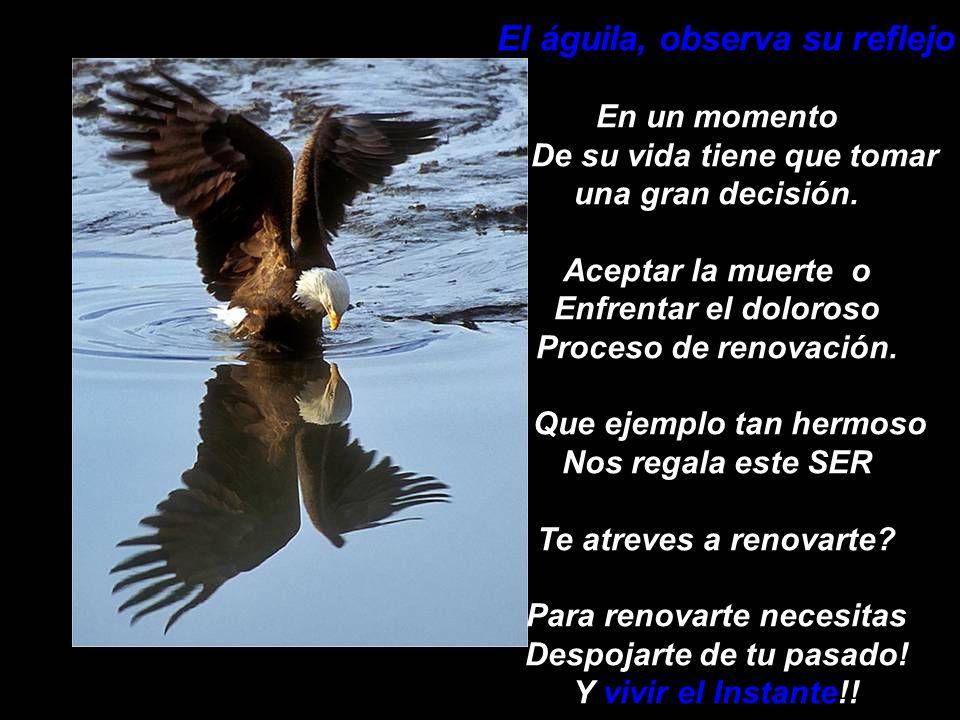 El águila, observa su reflejo En un momento De su vida tiene que tomar una gran decisión.