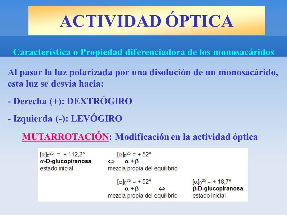 ACTIVIDAD ÓPTICA Característica o Propiedad diferenciadora de los monosacáridos Al pasar la luz polarizada por una disolución de un monosacárido, esta luz se desvía hacia: - Derecha (+): DEXTRÓGIRO - Izquierda (-): LEVÓGIRO MUTARROTACIÓN: Modificación en la actividad óptica