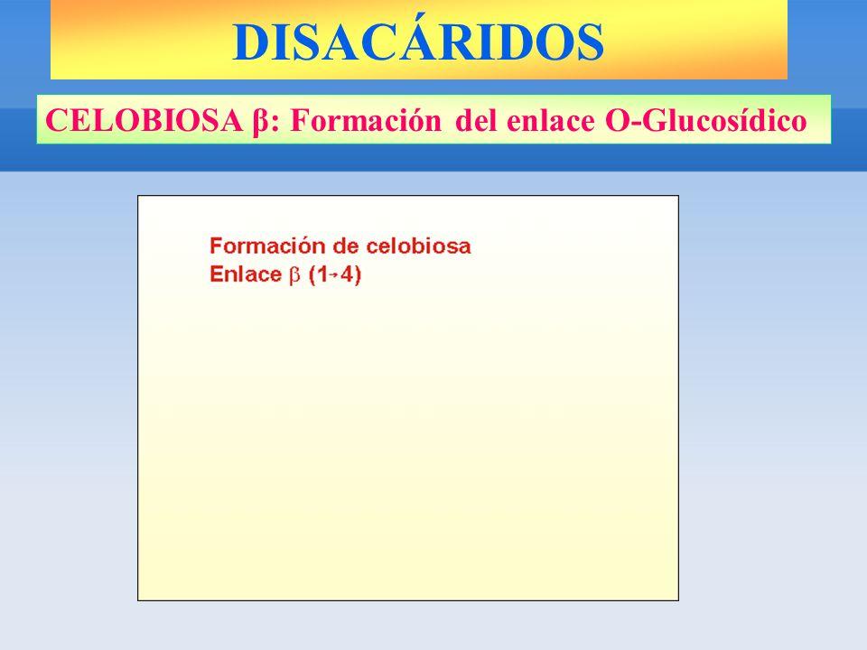 CELOBIOSA β: Formación del enlace O-Glucosídico DISACÁRIDOS