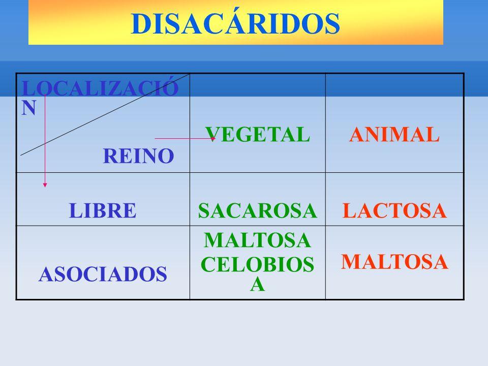 LOCALIZACIÓ N REINO VEGETALANIMAL LIBRESACAROSALACTOSA ASOCIADOS MALTOSA CELOBIOS A MALTOSA DISACÁRIDOS