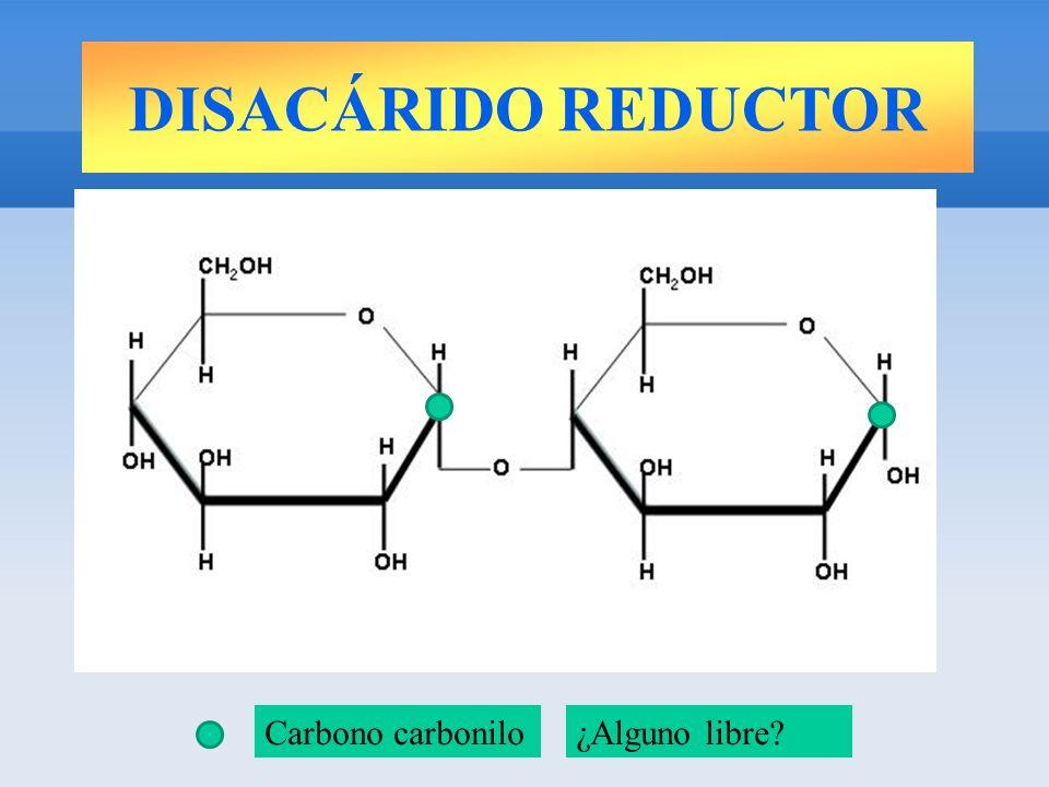 DISACÁRIDO REDUCTOR Carbono carbonilo¿Alguno libre