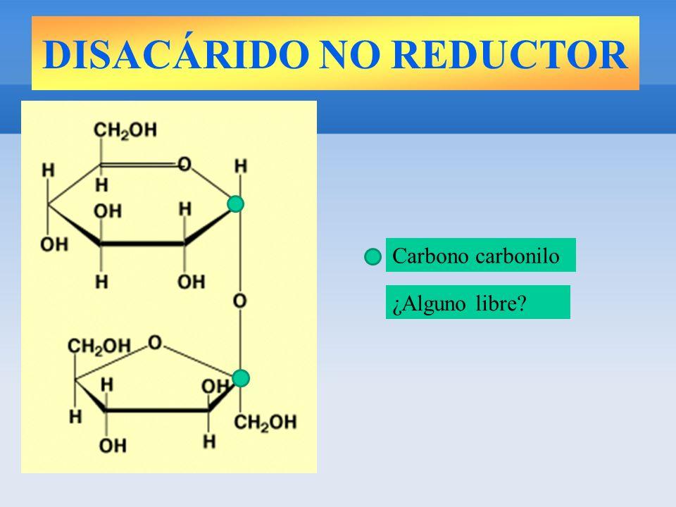 DISACÁRIDO NO REDUCTOR Carbono carbonilo ¿Alguno libre