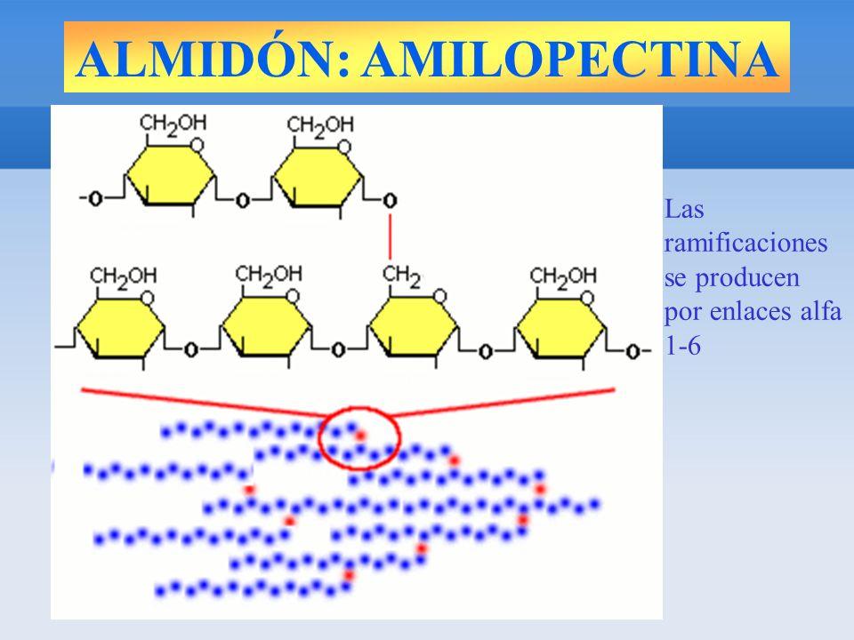 Las ramificaciones se producen por enlaces alfa 1-6
