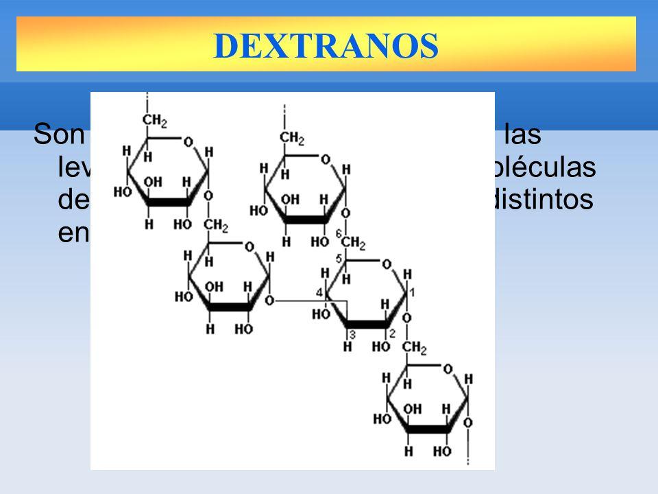 DEXTRANOS Son los polisacáridos de reserva de las levaduras.