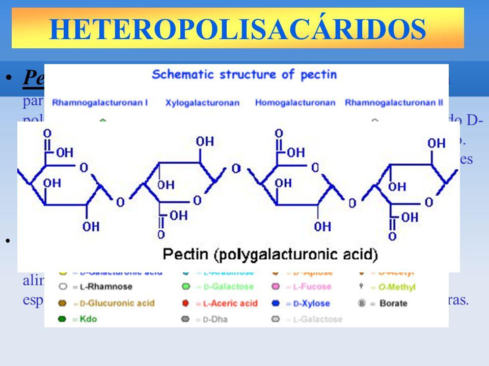 HETEROPOLISACÁRIDOS Pectina: La pectina es el principal componente enlazante de la pared celular de los vegetales y frutas.