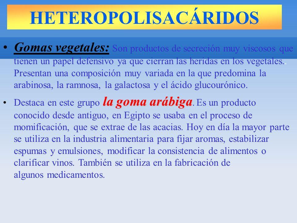 HETEROPOLISACÁRIDOS Gomas vegetales: Son productos de secreción muy viscosos que tienen un papel defensivo ya que cierran las heridas en los vegetales..
