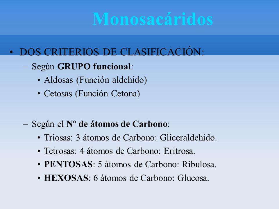 NÚMERO DE CARBONO S ALDEHIDOS (ALDOSAS) CETONAS (CETOSAS) 3 C (TRIOSAS) GLICERALDEHI DO DIHIDROXI CETONA 5C (PENTOSA S) RIBOSA DESOXIRRIBOS A RIBULOSA 6C (HEXOSAS) GLUCOSA GALACTOSAFRUCTOSA Monosacáridos