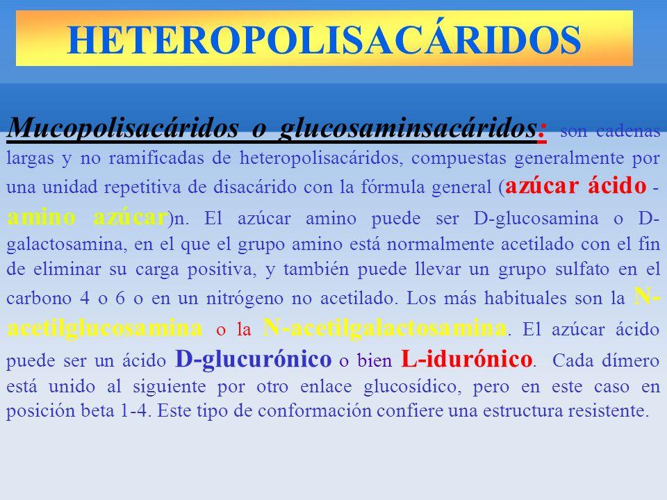 HETEROPOLISACÁRIDOS Mucopolisacáridos o glucosaminsacáridos: son cadenas largas y no ramificadas de heteropolisacáridos, compuestas generalmente por una unidad repetitiva de disacárido con la fórmula general ( azúcar ácido - amino azúcar )n.