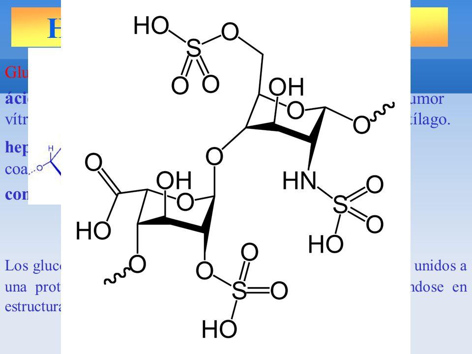 HETEROPOLISACÁRIDOS Glucosaminoglicanos relevantes: ácido hialurónico : tejido conjuntivo, cordón umbilical, humor vítreo, líquido sinovial (lubricante), vasos sanguíneos y cartílago.