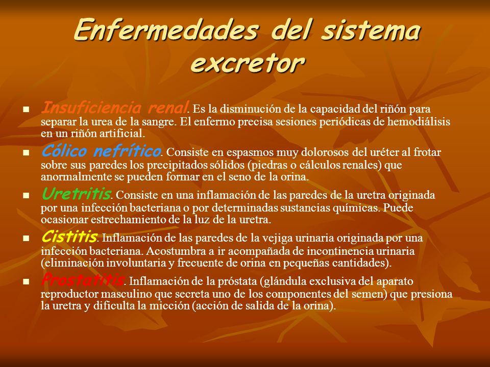 Enfermedades del sistema excretor Insuficiencia renal. Es la disminución de la capacidad del riñón para separar la urea de la sangre. El enfermo preci