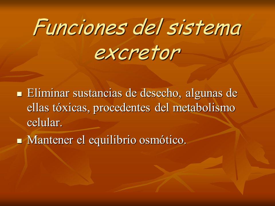 Funciones del sistema excretor Eliminar sustancias de desecho, algunas de ellas tóxicas, procedentes del metabolismo celular. Eliminar sustancias de d