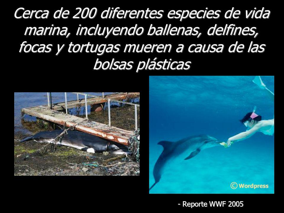 Cerca de 200 diferentes especies de vida marina, incluyendo ballenas, delfines, focas y tortugas mueren a causa de las bolsas plásticas - Reporte WWF 2005