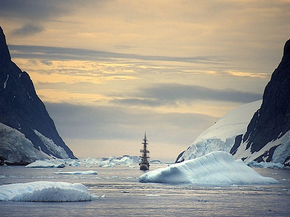 Pese a un clima tan adverso, la Antártida, cuenta con un rico reino animal, al que sorprendentemente se han adaptado
