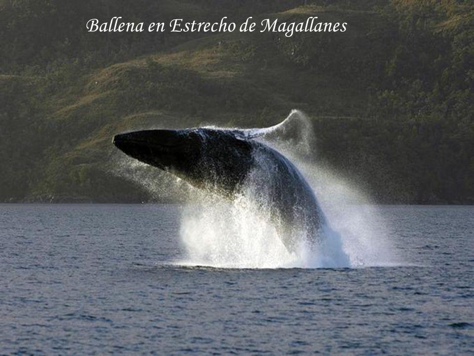 Ballena en Estrecho de Magallanes
