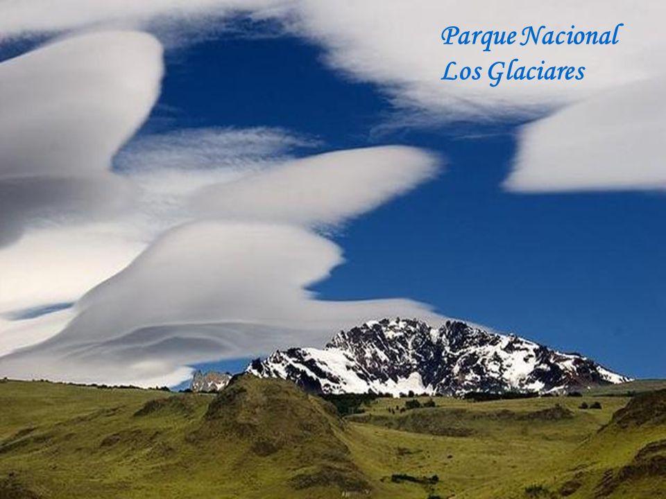 Araucarias – Parque Nacional Conguillio