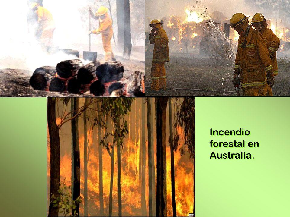 Incendio forestal en Australia. Incendio forestal en Australia.