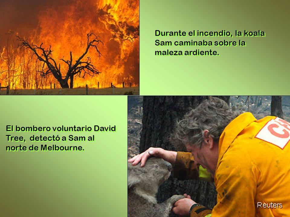 El bombero voluntario David Tree, detectó a Sam al norte de Melbourne.