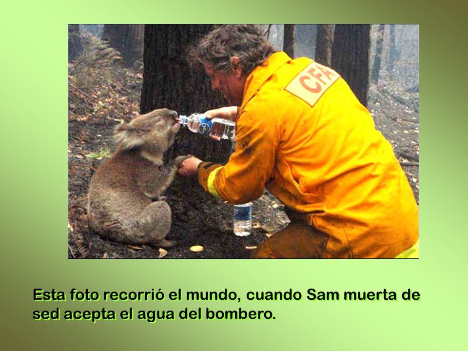 Esta foto recorrió el mundo, cuando Sam muerta de sed acepta el agua del bombero.