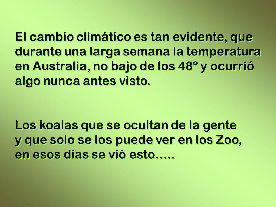 El cambio climático es tan evidente, que durante una larga semana la temperatura en Australia, no bajo de los 48º y ocurrió algo nunca antes visto.