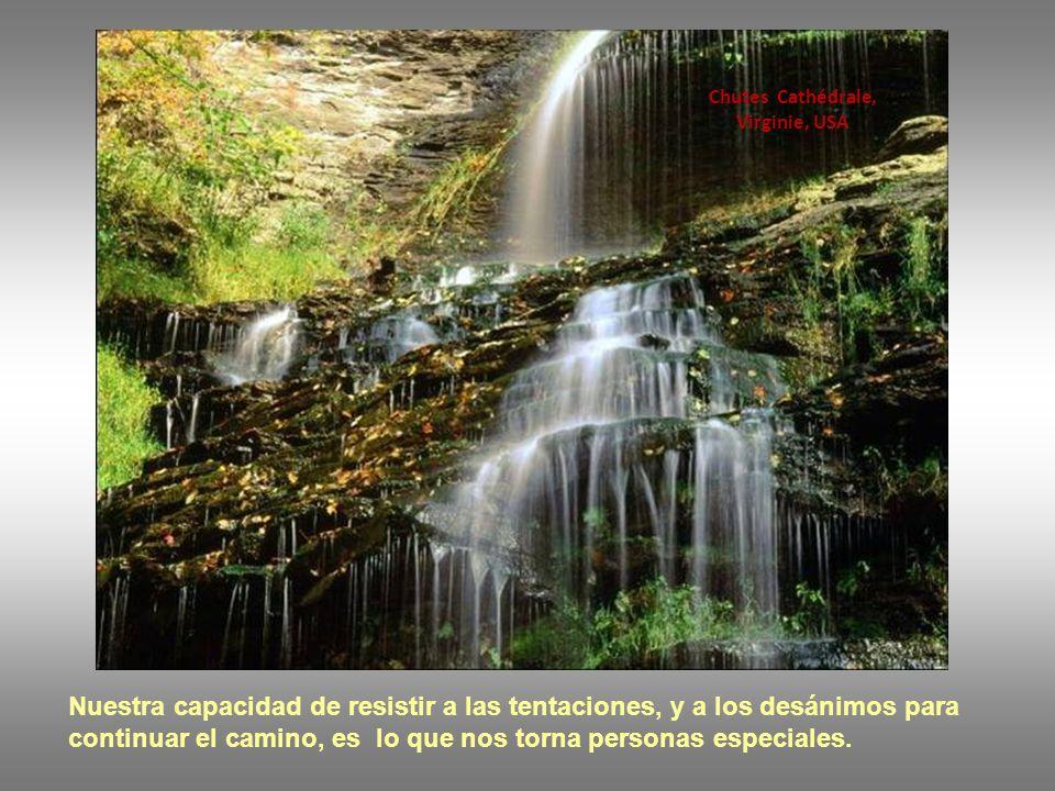 Forêt nationale Umpqua, Oregon, USA Nuestras acciones, especialmente cuando tenemos que superarnos, hacen de nosotros personas mejores.