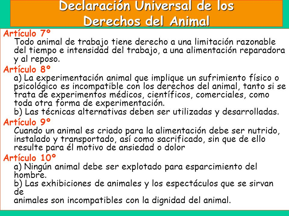 Declaración Universal de los Derechos del Animal Artículo 7º Todo animal de trabajo tiene derecho a una limitación razonable del tiempo e intensidad d